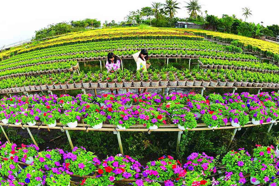 960-flowers-on-tet-holiday-in-sa-dec-mekong