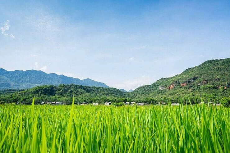 mai-chau-rice-paddies