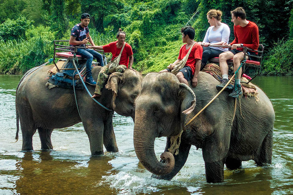 elephant-camp-highlights-of-thailand-8-days-4
