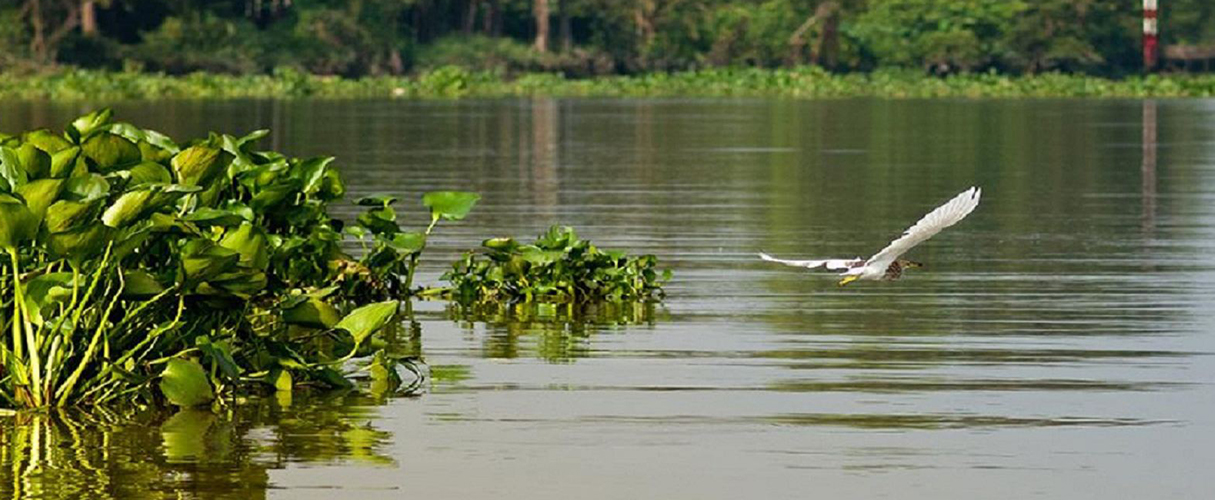 Mekong Delta Full Day by Speedboat