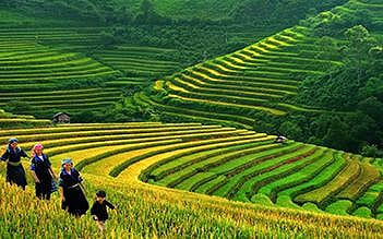 Combo Halong - Sapa 4 days by bus
