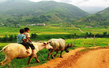 Sapa trekking by bus 3D2N (homestay and hotel stay)