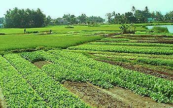 Nha Trang Countryside Experience full day