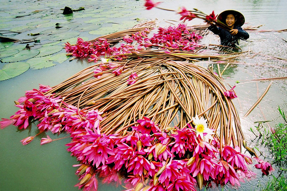 960-mekong-delta-daily-life