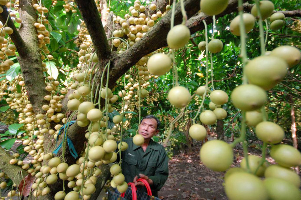 ben-tre-orchard-garden-my-tho-ben-tre-full-day-group-tour-1