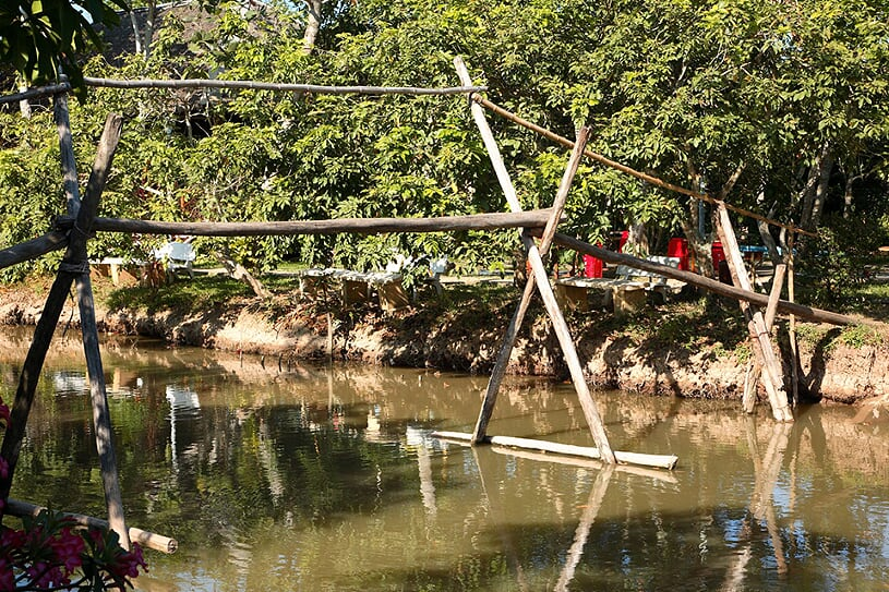 monkey-bridge-1