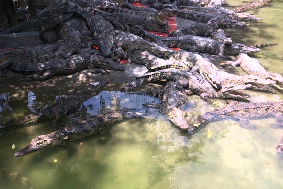 crocodile-farm-my-tho-can-tho-chau-doc-phnom-penh-3-days-2