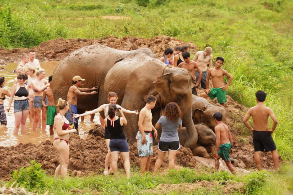 elephant-camp-chiang-mai