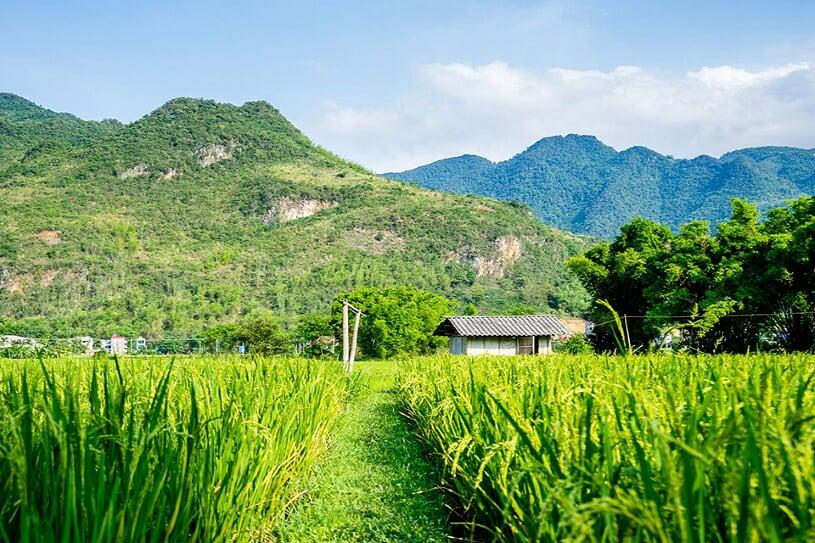 mai-chau-landscape