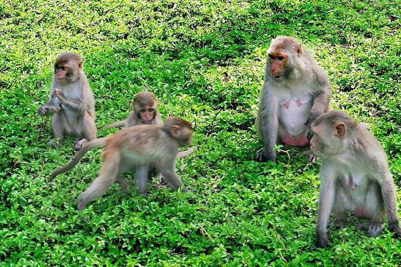 monkey-island-1