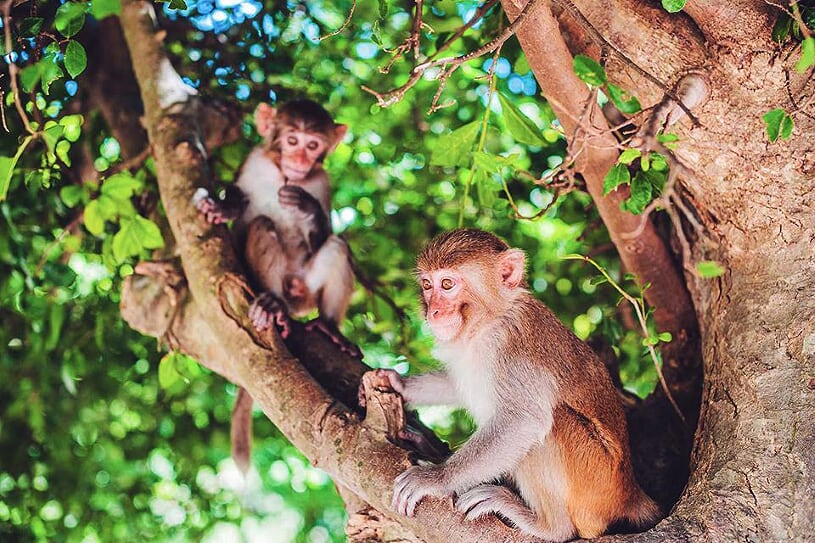 monkey-island-3