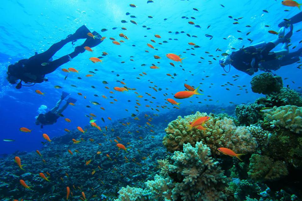 960-nha-trang-scuba-diving