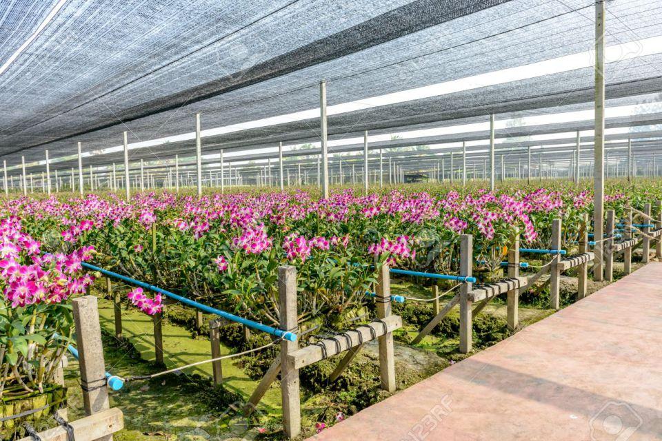 orchid-nursery