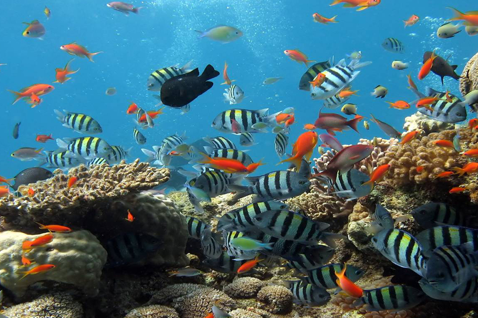 snorkeling-phu-quoc-adventure-boat-tour-3