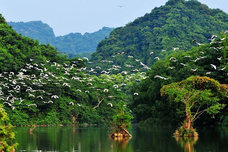 thung-nham-bird-garden-1