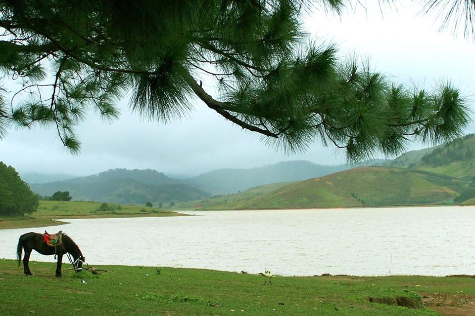 960-tuyen-lam-lake-da-lat