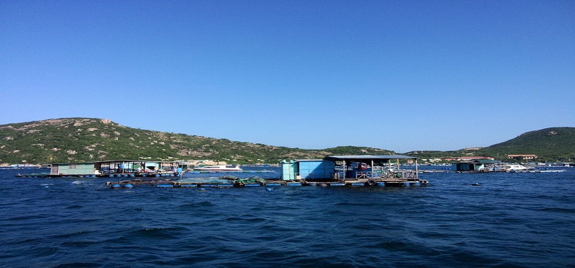 Discover the An Binh Island by boat