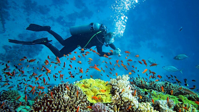 Scuba diving in Halong