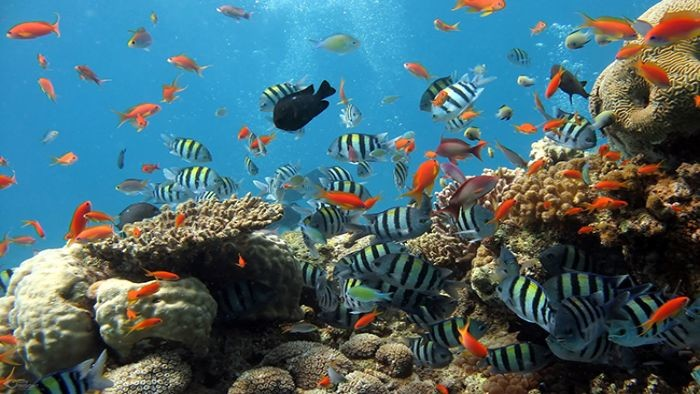 How to scuba diving in Phu Quoc