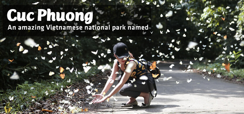 An amazing Vietnamese National Park named Cuc Phuong