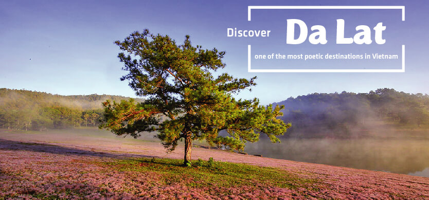 Discover Dalat - One of the most poetic destinations in Vietnam