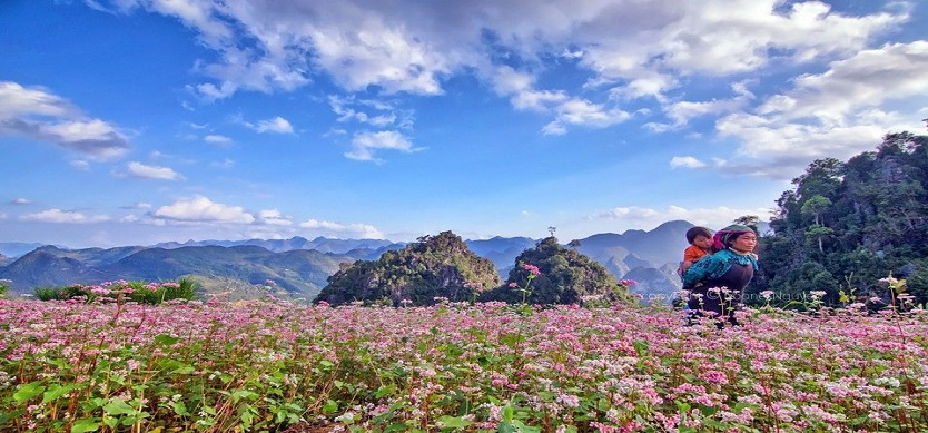Visit Ha Giang In October To Admire The Beauty Of The Buckwheat Flowers