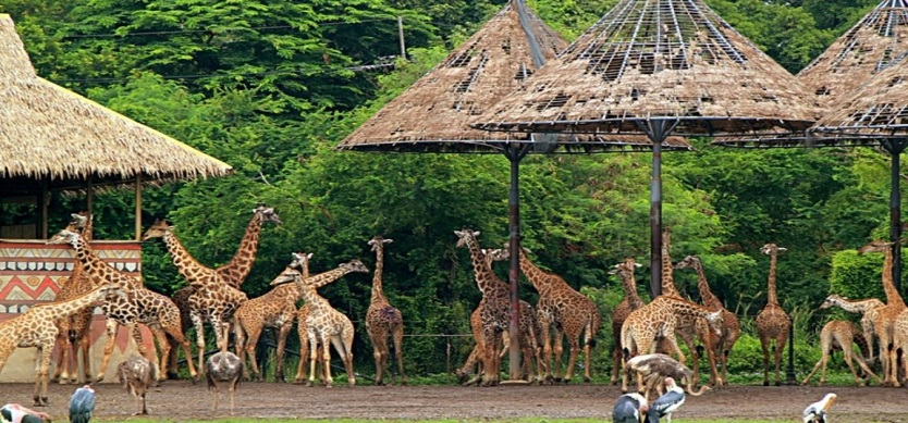 What you need to know when visiting Safari World