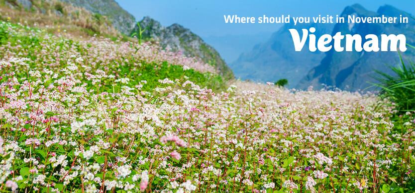 Where should you visit in November in Vietnam?