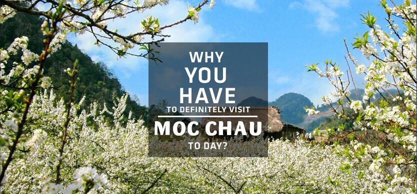 Why should you definitely visit Moc Chau?