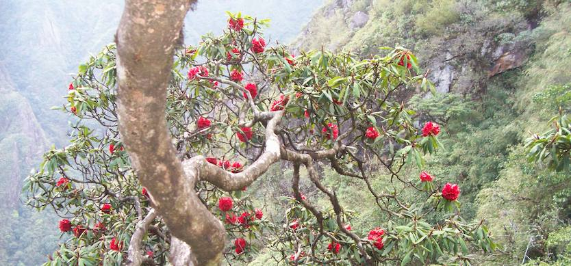 Azalea Flower Festival to be held in April by Sapa Legend