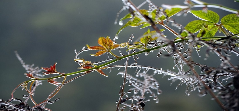 Sapa covered by frost