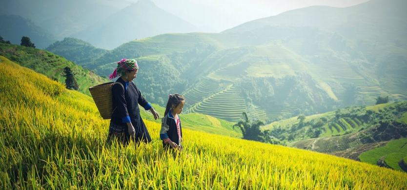 Essential Tips for Sapa Trekking