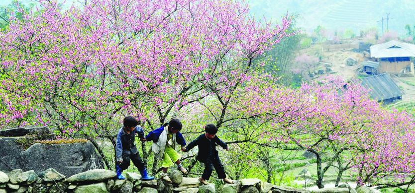 Visit Sapa in Spring