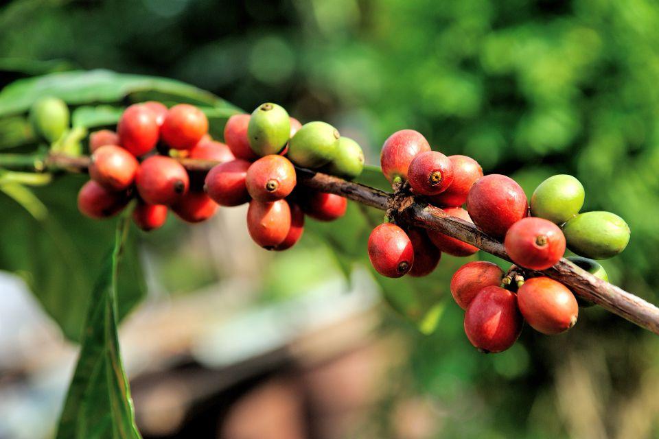 vi-coffee