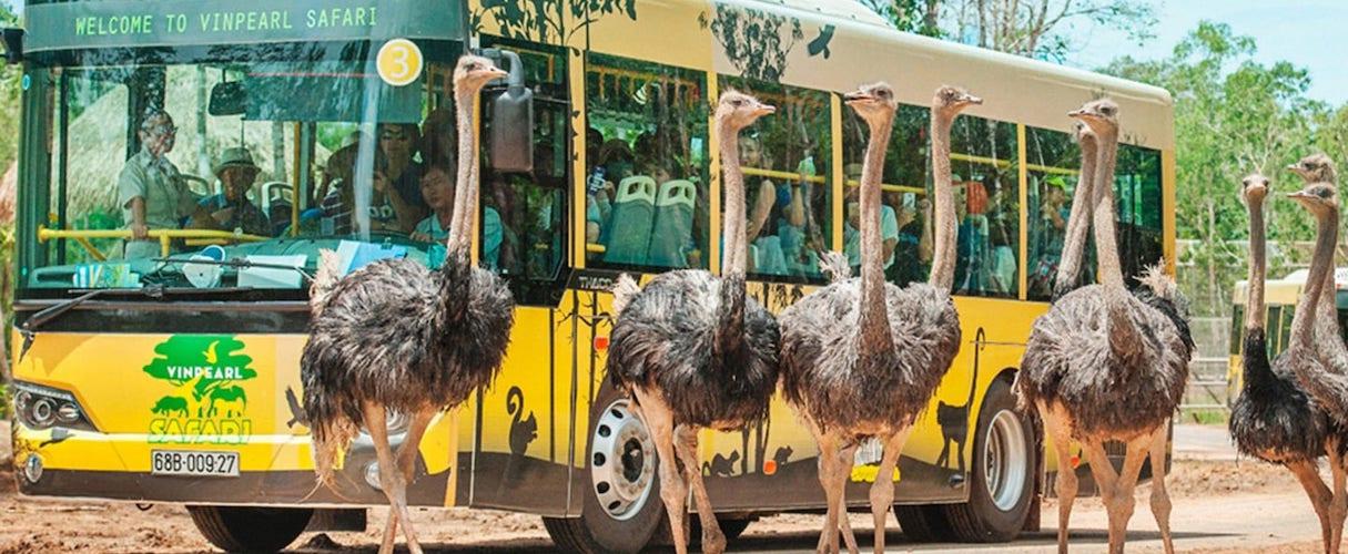 Phu Quoc Vinpearl Safari