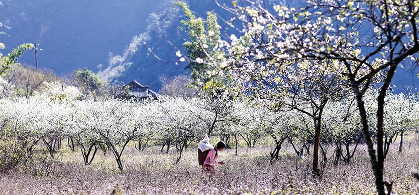 9 Most Attractive Sapa Destinations In The Spring