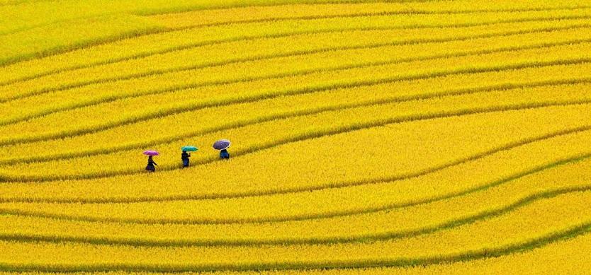 The most popular symbols of Vietnamese village
