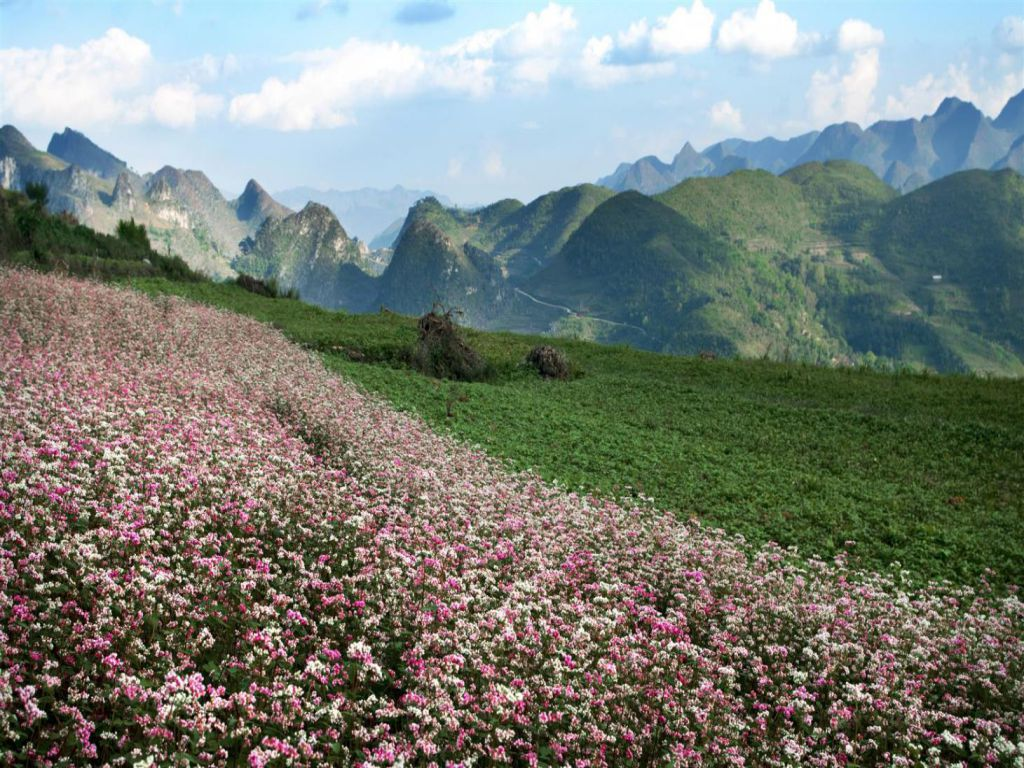 flower-hill-in-ha-giang