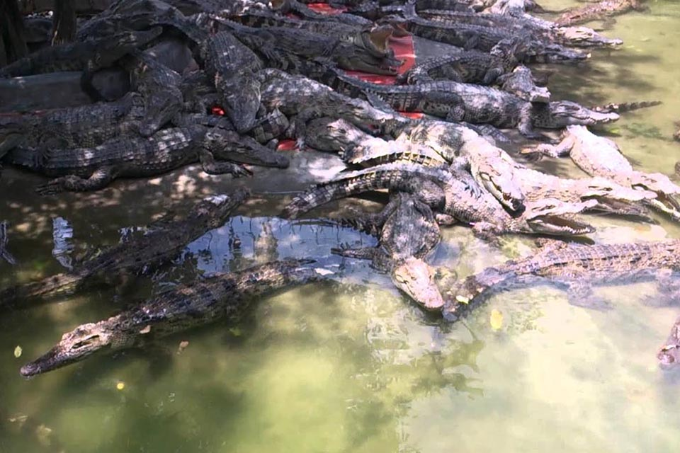 crocodile-farm-my-tho-can-tho-chau-doc-3-days-2