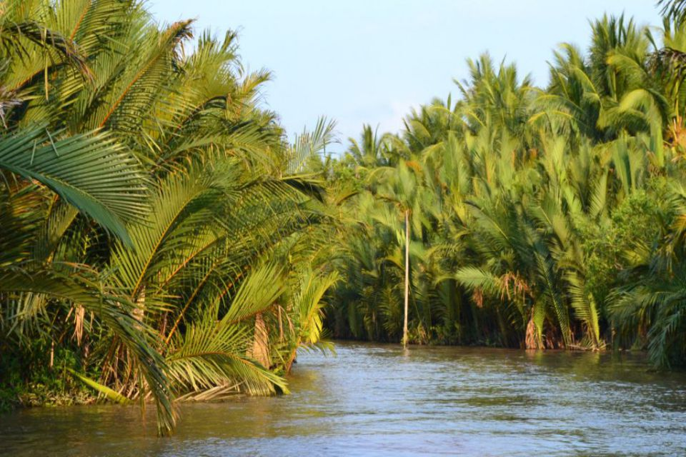 coconut-along-river_960