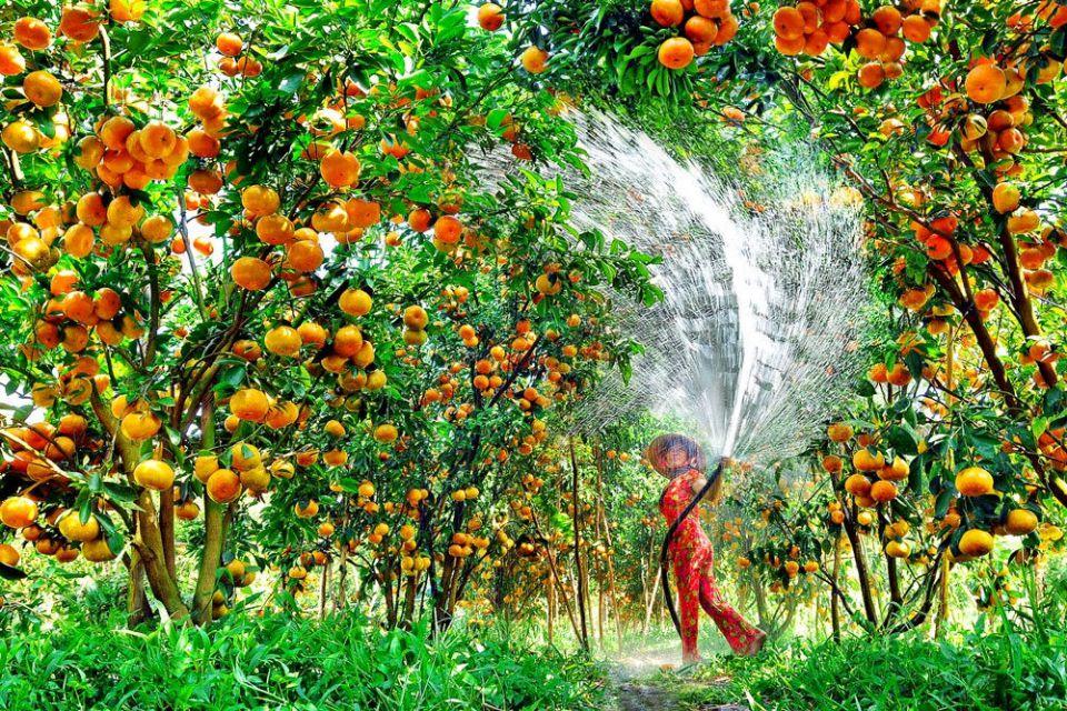 fruit-garden-lai-vung