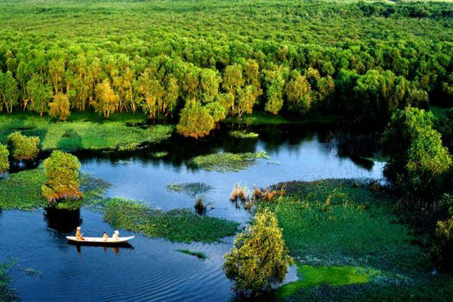 tra-su-cajuput-forest