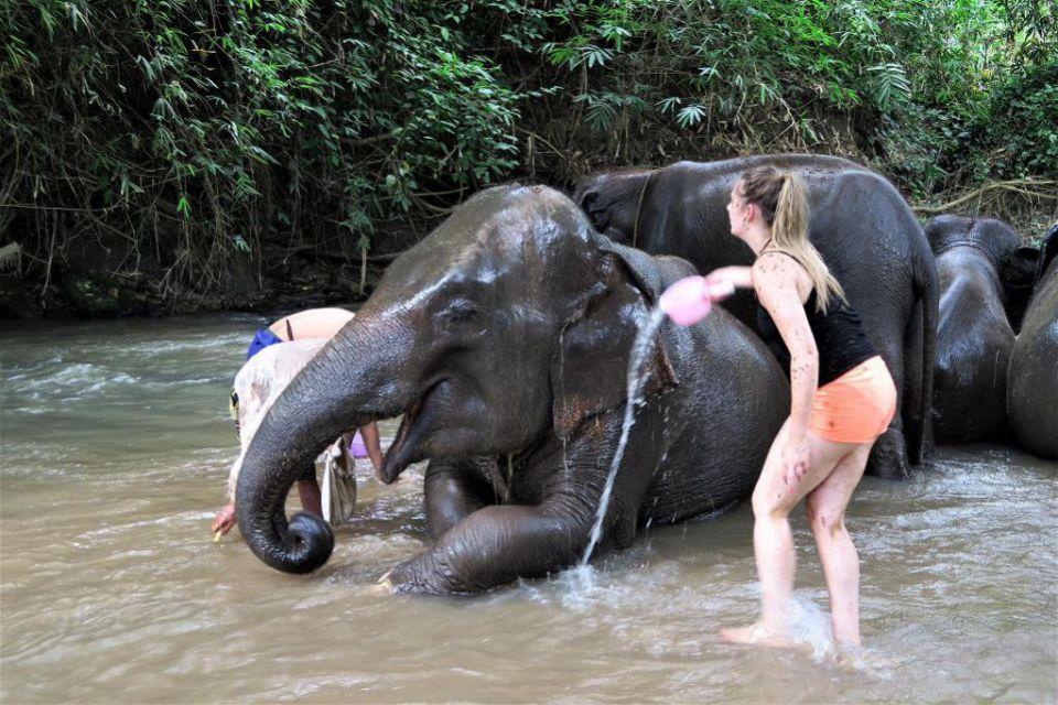 visit-old-elephant