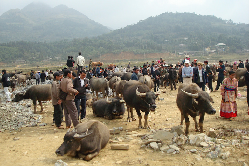 960-bufflo-trading-at-bac-ha-market