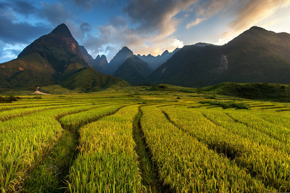 960-sapa-yellow-rice-terraces