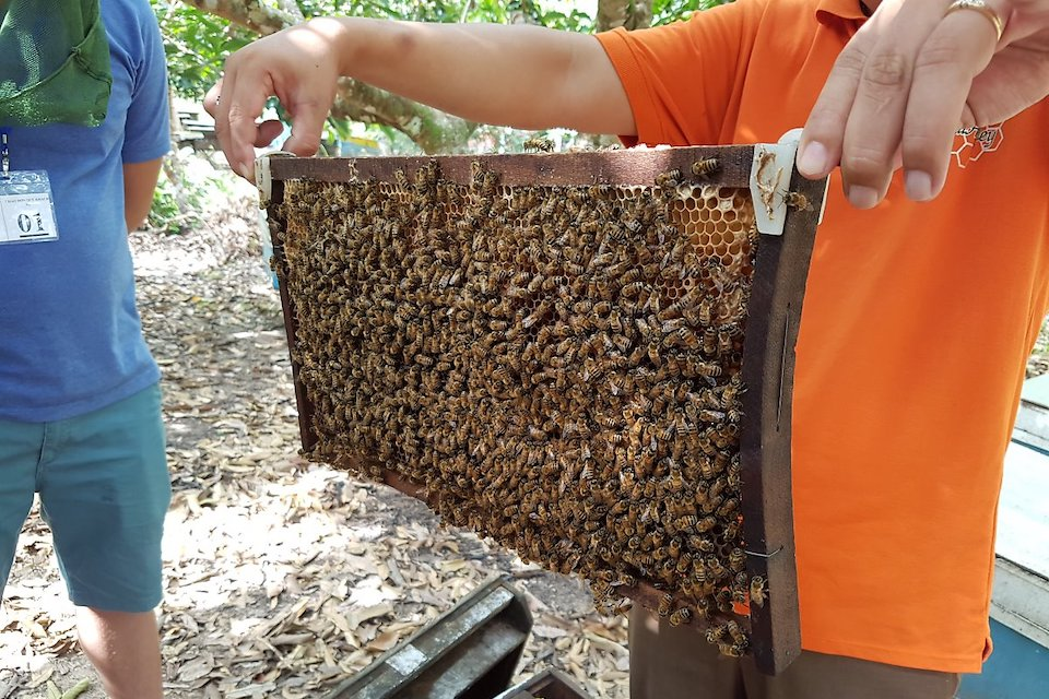honey-bees-north-and-south-of-phu-quoc-full-day-tour-3