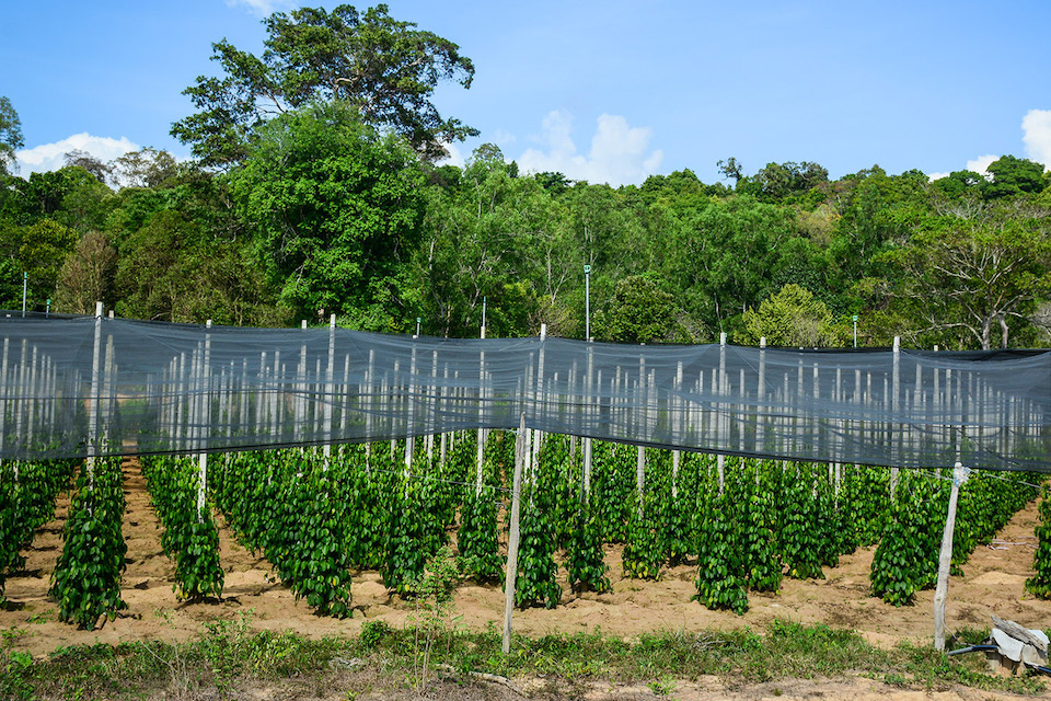 pepper-farm-phu-quoc-northern-island-day-tour-1