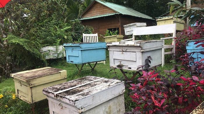 Phu Quoc Bee Farm