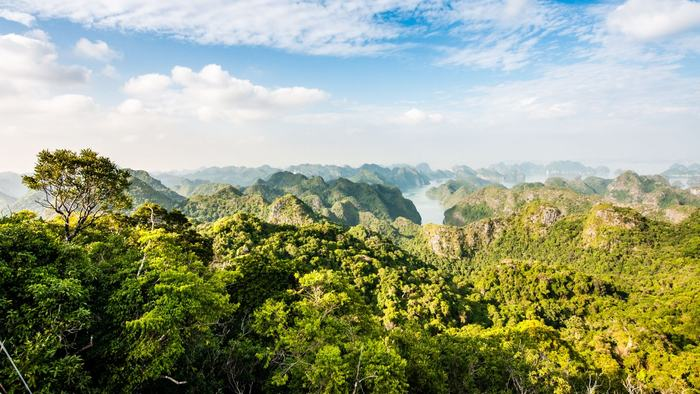 The lush nature in Cat Ba National Park