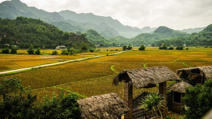 Rice paddies in Mai Chau